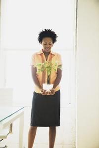 Comment faire pour s'occuper d'une ficus alii plante