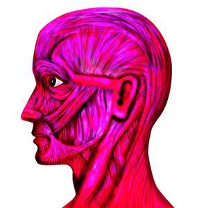 Expériences scientifiques système musculaire