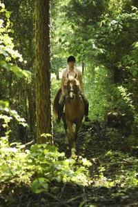 Comment faire une ligne de piquetage haute pour chevaux