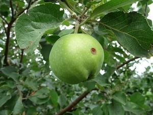 Comment éloignés devrait un planter les arbres fruitiers ?