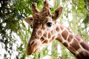 Zoo Art activités pour enfants d'âge préscolaire