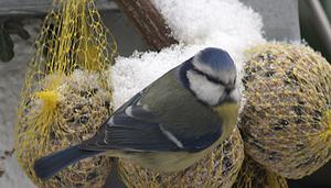 comment faire des boules de graines pour oiseaux. Black Bedroom Furniture Sets. Home Design Ideas
