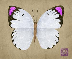 Types de papillons violets