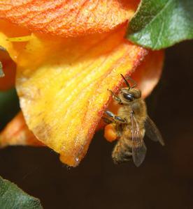 Deuxième Grade Honey Bee babillard idées