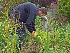 Comment se débarrasser des mauvaises herbes tête de chèvre