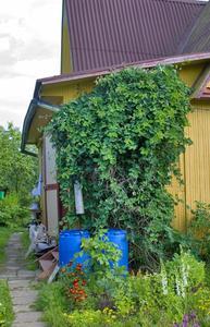 Idées d'aménagement paysager pour un petit espace extérieur
