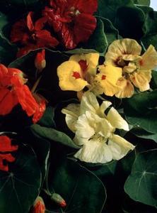 Idées de Pots de fleurs