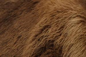 Moyens traditionnels de tannage de peaux