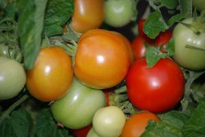 Liste des légumes rouges
