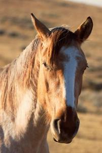 Comment faire pour refaire une graisse de cheval présentant une insuffisance pondérale