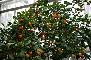 Comment faire une fleur d'oranger miniature