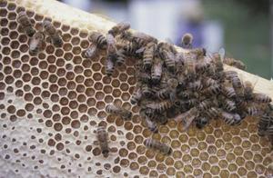 ce qui attire les abeilles charpenti res. Black Bedroom Furniture Sets. Home Design Ideas