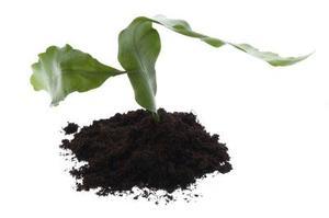 L'utilisation de lumières tristes à faire pousser des plantes