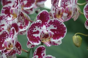 Que faire avec vieux voilages - Comment couper la tige d une orchidee apres floraison ...