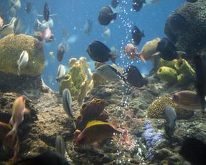 Comment réparer un verre fissuré dans un Aquarium