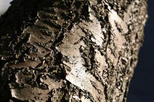 Comment prendre soin de l'écorce des arbres