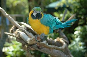 Comment garder des oiseaux sauvages de la volière