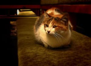 Comment arrêter votre chat d'uriner sur les meubles