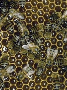 Comment faire le baume à lèvres maison cire d'abeille