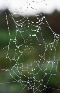 Comment faire une fausse toile d'araignée