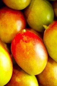 Comment greffer une mangue