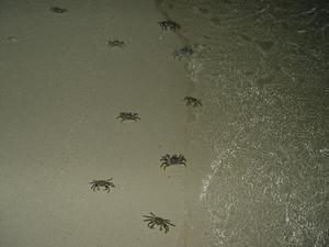 Comment faire pour pêcher avec des crabes violonistes à Myrtle Beach, Caroline du Sud