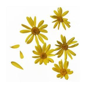 fleurs jaunes et un buisson de bee. Black Bedroom Furniture Sets. Home Design Ideas