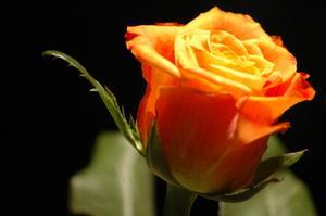 Activités préscolaires de fleurs & plantes