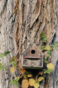 L'histoire de cabanes d'oiseaux
