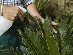 Comment faire pour vaporiser les sels d 39 epsom dans mon - Sel epsom jardin ...