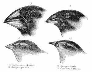 Différence entre l'évolution biologique & Social