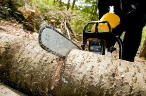 Foresterie & journalisation emplois