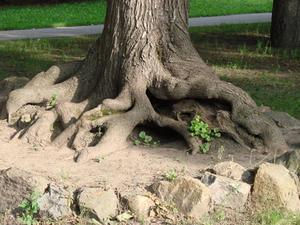 Faits sur les racines des arbres