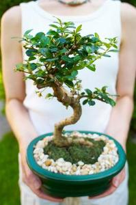 Comment faire pousser un bonsa moss - Comment faire un bonsai ...