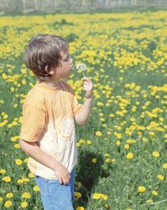 Comment dessiner une fleur de pissenlit