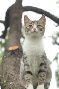 Remède maison pour les acarides d'oreille chez les chats