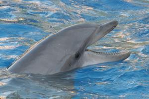 Comment faire un gâteau avec les dauphins pour une douche de bébé ?