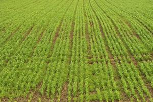 Herbicide et les effets des pesticides sur les bactéries du sol