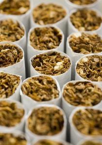 Les daphnies et la nicotine