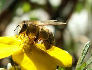 comment faire pour supprimer une reine des abeilles de la. Black Bedroom Furniture Sets. Home Design Ideas
