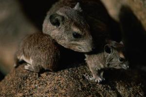 Comment se débarrasser des souris & Rats dans la pelouse