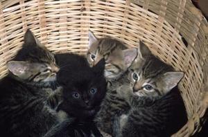 Comment utiliser le citron pour tuer les puces sur les chatons nouveau-nés & chats