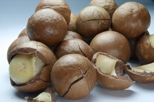 Comment pousser des noix de macadamia de graine ?