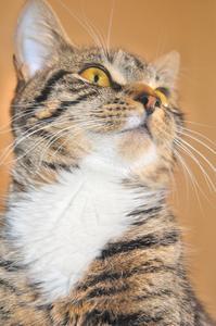 Comment supprimer un coutil de cerfs communs d'un chat