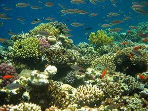 Cadeaux de biologie marine