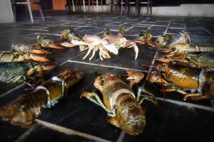 Comment déterminer le prix de marché du homard