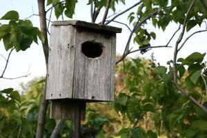 Comment obtenir des oiseaux au nid dans un nichoir
