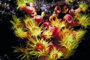 Comment prendre soin de coraux mous