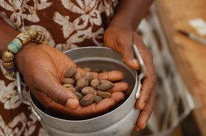 Est le beurre de karité & toxique de beurre de cacao aux chiens ?
