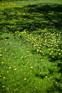Pulv risateur a mauvaise herbe - Comment tuer les mauvaises herbes ...